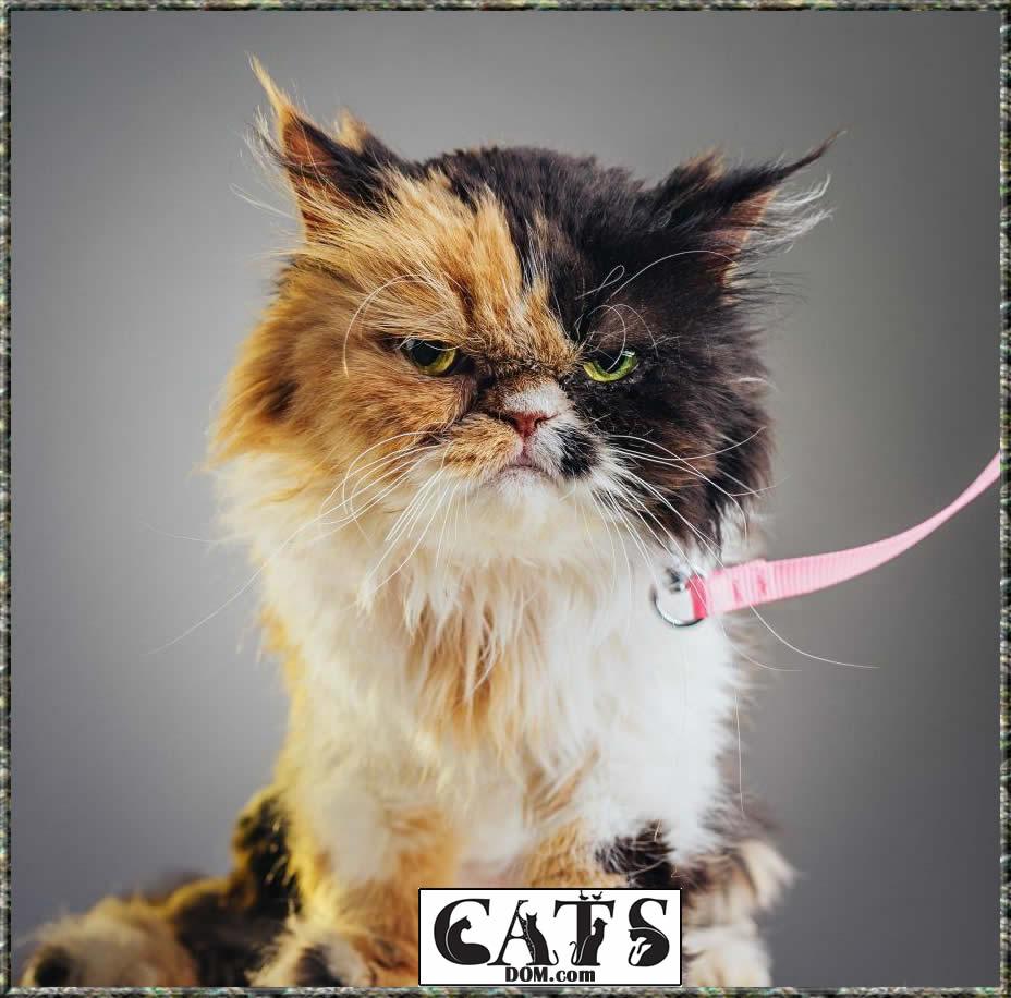 why do cat collars have bells hazard