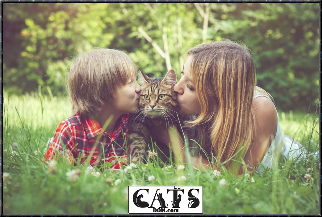 www.catsdom.com The Best Dewormer for Cats Keep the nasty parasites at Bay Advantages of Deworming in Cats