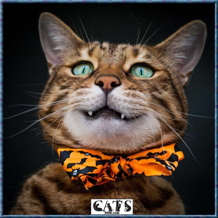 What you need to know today About Bengal Cats Costs