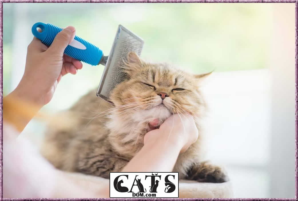 How to pick best cat brush for shedding