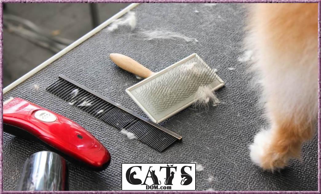 Best cat brush for shedding Type