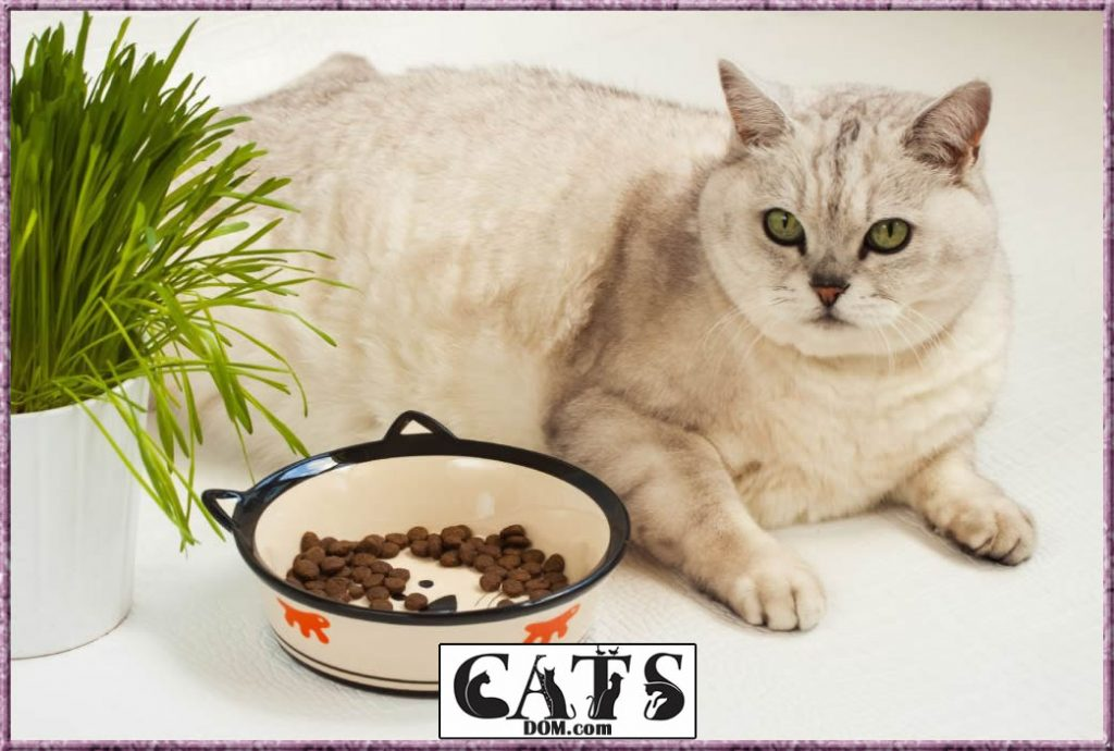 How To Fatten Up A Kitten with Quality Food