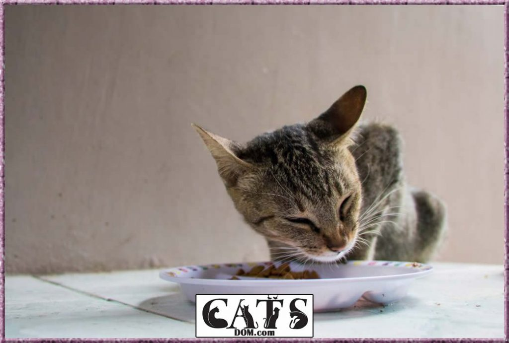 How to fatten up a kitten in 7 quick and easy steps Malnourishment