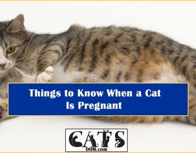Cat is pregnant