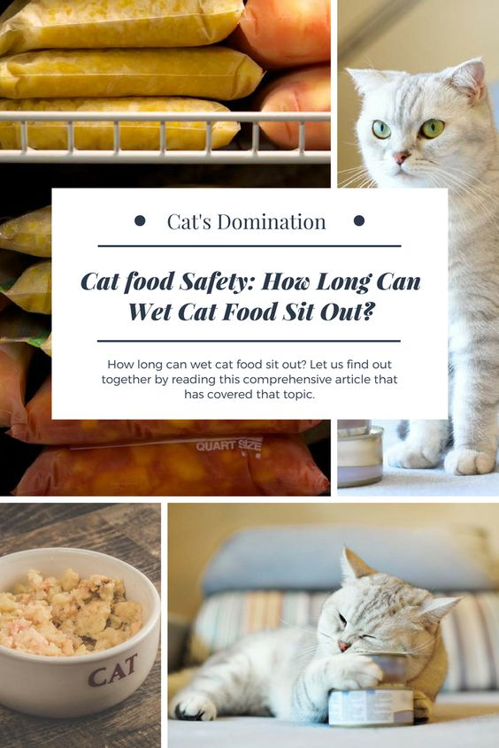 How Long Can Wet Cat Food Sit Out