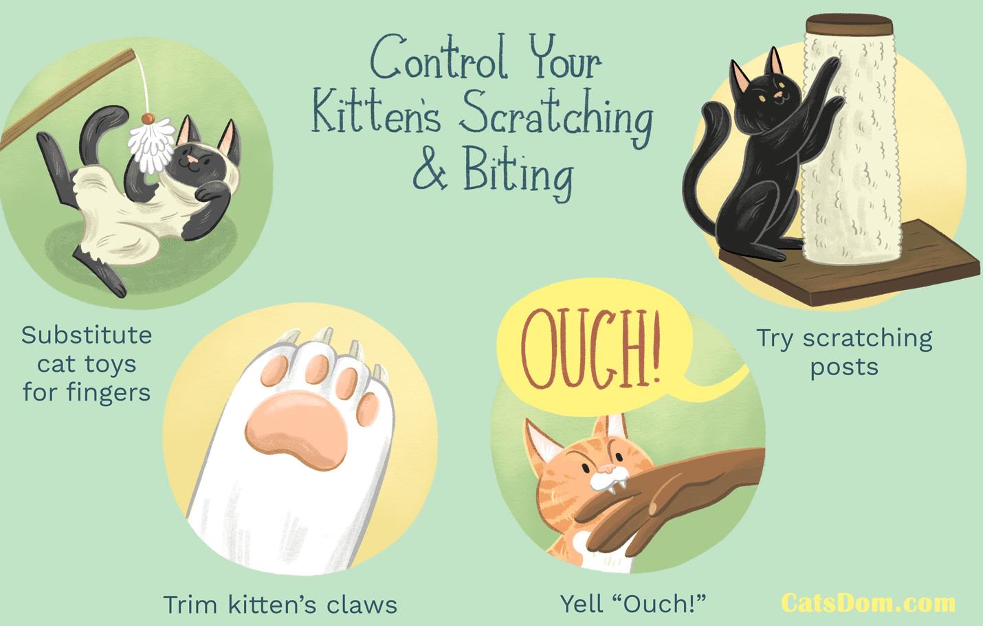 control cats scratching biting